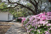 Bonnie Blue Walking Tours of Savannah