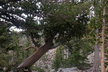 Bristlecone Trail, Mount Charleston, United States