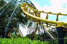 Busch Gardens Tampa Bay, Tampa, United States