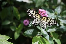 Butterfly World, Coconut Creek, United States