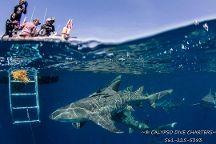 Calypso Dive Charters