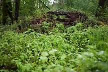 Camassia Natural Area, West Linn, United States