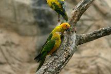 Cameron Park Zoo, Waco, United States