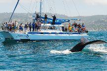 Capt. Dave's Dana Point Dolphin & Whale Watching Safari