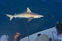 Cocoa Beach Sportfishing Charters