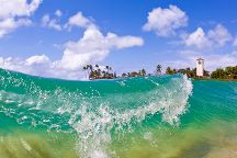 Coconut Adventures