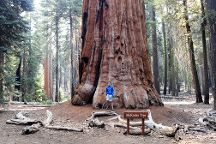 Congress Trail, Sequoia and Kings Canyon National Park, United States