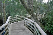 Corkscrew Swamp, Naples, United States