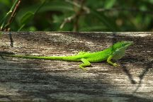 Corkscrew Swamp, Naples, United States