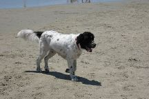 Coronado Dog Beach, Coronado, United States