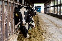 Country Dairy, New Era, United States