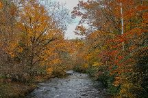 Deep Creek, Great Smoky Mountains National Park, United States