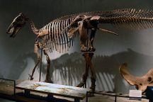 Denver Museum of Nature & Science, Denver, United States