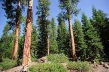 Deschutes National  Forest, Bend, United States