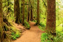 Drift Creek Falls Trail, Otis, United States