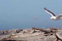 Dungeness National Wildlife Refuge, Sequim, United States