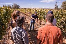 Elite Wine Tours Paso