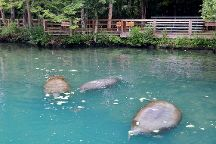 Ellie Schiller Homosassa Springs Wildlife State Park, Homosassa Springs, United States