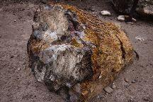 Escalante Petrified Forest State Park, Escalante, United States