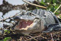 Everglades Day Safari, Davie, United States
