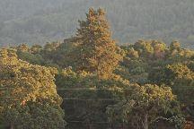 Filoli, Woodside, United States