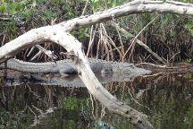 Florida Outdoor Adventures - Guided Everglades Kayak Tours, Everglades National Park, United States