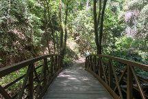 Forest of Nisene Marks State Park, Aptos, United States