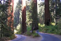 Generals Hwy, Sequoia and Kings Canyon National Park, United States