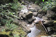 Hamilton Mountain Loop Trail, Stevenson, United States