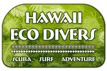 Hawaii Eco Divers & Surf Adventures