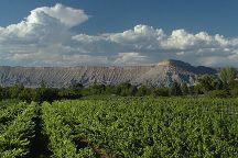 Hermosa Vineyards