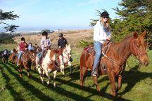 Horse N Around Trail Rides
