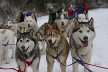 Husky Works Mushing Co., West Wardsboro, United States