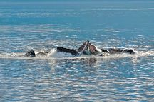 Icy Strait Whale Adventures