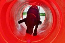 Jackson Bark - Dog Park, Chicago, United States