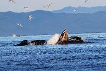 Ketchikan Fish Charters
