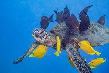 Kohala Divers, Kawaihae, United States