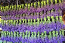 Lavender Wind Farm, Coupeville, United States