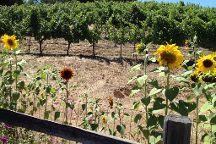 Leone Wine Tours