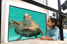 Loggerhead Marinelife Center, Juno Beach, United States