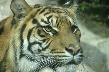 Louisville Zoo, Louisville, United States