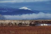 Lower Klamath National Wildlife Refuge, California, United States