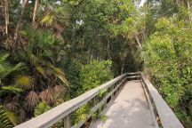 Mahogany Hammock, Everglades National Park, United States