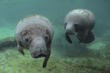 Manatee Tour and Dive