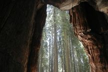 Mariposa Grove of Giant Sequoias, Yosemite National Park, United States