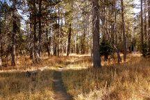 McGurk Meadow, Yosemite National Park, United States