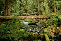 McKenzie River National Recreation Trail, Eugene, United States