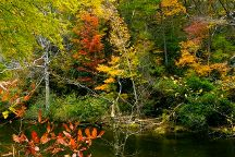 Metcalf Bottoms Picnic Area, Great Smoky Mountains National Park, United States