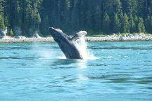 Misty Bay Lodge Whalewatching