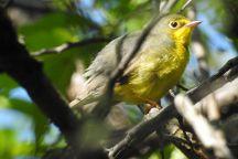 Montrose Point Bird Sanctuary, Chicago, United States